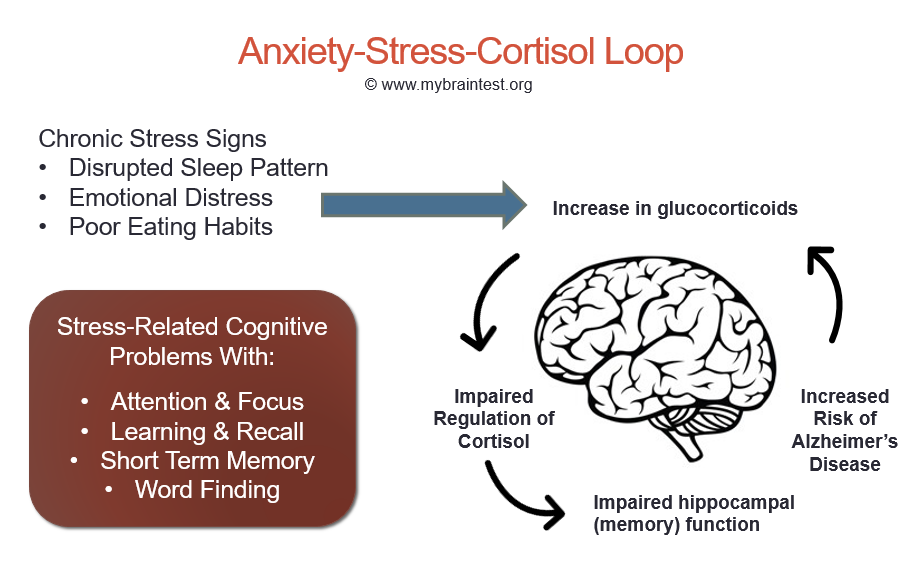Chronic anxiety stress and memory loss memoryhealthcheck chronic stress can also impair executive functions such as short term memory planning and attention and has been shown to act as a trigger for ccuart